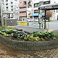 2013年冬花壇