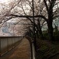 大横川散歩道