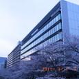 江東・大横川桜並木(2011年4月7日)